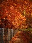 гуляет Осень в городе моём...