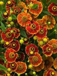 Среди бесчисленных цветов покажется, что Счастье рядом...
